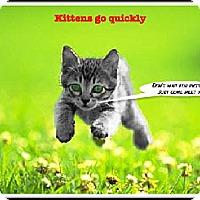 Adopt A Pet :: Kittens, Kittens, Kittens - Bradenton, FL