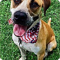 Adopt A Pet :: T-Dog - Converse, TX