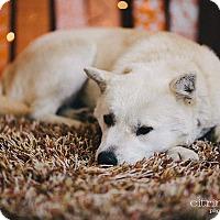Adopt A Pet :: Blondie - Portland, OR
