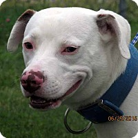 Adopt A Pet :: Happy - Germantown, MD