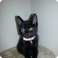Adopt A Pet :: Aurora - McHenry, IL