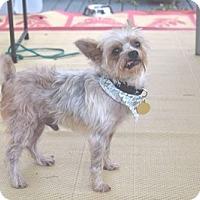 Adopt A Pet :: Slick - Beavercreek, OH