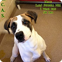 Adopt A Pet :: 1-10 Icarus - Triadelphia, WV