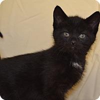 Adopt A Pet :: Pepper - Larned, KS