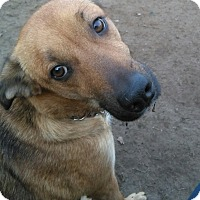 Adopt A Pet :: Maid Marion - Northumberland, ON