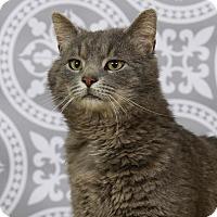 Adopt A Pet :: Big Kahuna - Kettering, OH