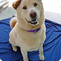Adopt A Pet :: Chase - Seal Beach, CA