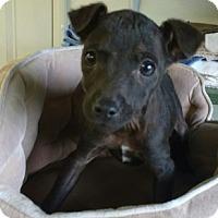 Adopt A Pet :: Nugget - Aurora, IL