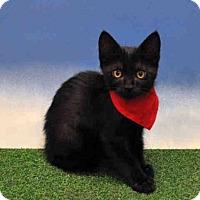 Adopt A Pet :: DEXTER - Naples, FL
