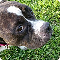 Adopt A Pet :: Chanel - Lorida, FL