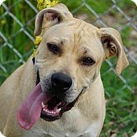 Adopt A Pet :: Jakob - Toccoa, GA