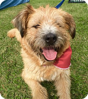 Terrier (Unknown Type, Medium) Mix Dog for adoption in Winnipeg, Manitoba - Ava