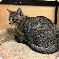 Adopt A Pet :: Bob - Riverside, CA