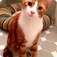 Adopt A Pet :: Cheddar - River Edge, NJ