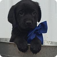 Adopt A Pet :: Murphy - Stamford, CT