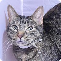 Adopt A Pet :: Jinka - New  York City, NY