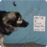 Adopt A Pet :: Skip/Pending - Zanesville, OH