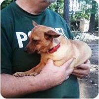 Adopt A Pet :: Daisy - Duluth, GA