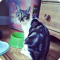 Adopt A Pet :: Livi - Springfield, PA