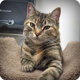 Petsmart Roseville Mn Cat Adoption