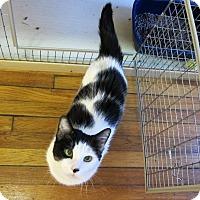 Adopt A Pet :: Veronica - Brooklyn, NY