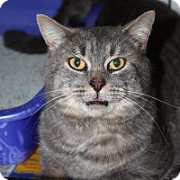 Adopt A Pet :: Sebastian - Adoption pending - North Branford, CT