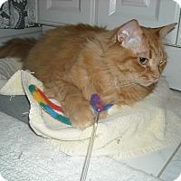 Adopt A Pet :: Gage-Loves Tummy Rubs - Arlington, VA