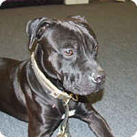 Adopt A Pet :: Lennox - Sterling, MA