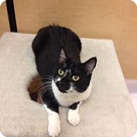 Adopt A Pet :: Myah - Scottsdale, AZ