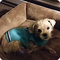 Adopt A Pet :: Gus - Tomah, WI