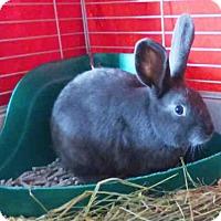 Adopt A Pet :: BUN BUN - Fort Wayne, IN