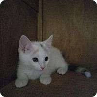 Adopt A Pet :: Honey Bun - Covington, KY