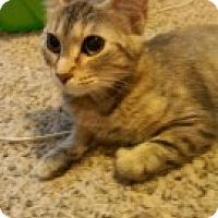 Adopt A Pet :: Carmen - McHenry, IL