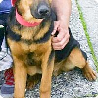 Adopt A Pet :: Zeus URGENT - Sacramento, CA