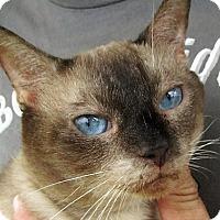 Adopt A Pet :: Loren - Germantown, MD