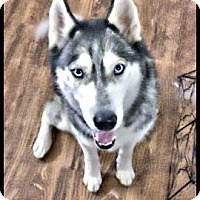 Adopt A Pet :: Everest - Adoption Pending! - Monument, CO