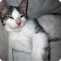 Adopt A Pet :: Jontae - Cerritos, CA