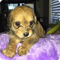 Adopt A Pet :: Katie Ledecky - Houston, TX