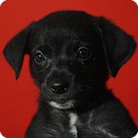 Adopt A Pet :: Pluto - Riverside, CA