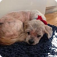 Adopt A Pet :: Matthew - Clarkston, MI