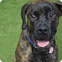 Adopt A Pet :: Larry Love / Jax - Scottsdale, AZ