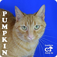 Adopt A Pet :: Pumpkin - Carencro, LA