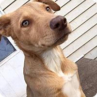 Adopt A Pet :: Phoenix - Enid, OK