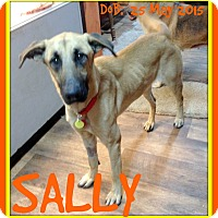 Adopt A Pet :: SALLY - Middletown, CT