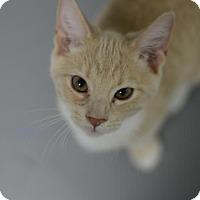 Adopt A Pet :: Mickey161811 - Atlanta, GA