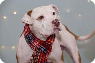 Terrier (Unknown Type, Medium) Mix Dog for adoption in Flint, Michigan - Benz *