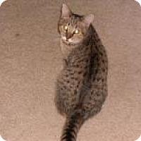 Adopt A Pet :: Daniel - Sedalia, MO