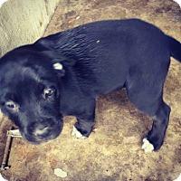 Adopt A Pet :: Jayco - Grand Bay, AL