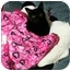 Photo 2 - Domestic Shorthair Cat for adoption in Little Rock, Arkansas - Abby