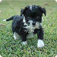 Adopt A Pet :: Hope - La Habra Heights, CA